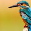 Penelitian Ungkap Ukuran Burung Semakin Menyusut Akibat Perubahan Iklim