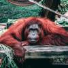 5 Hewan yang Mempercantik Indonesia
