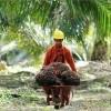 APPKSI Desak Presiden Jokowi Cabut Kebijakan Pungutan Ekspor Kelapa Sawit