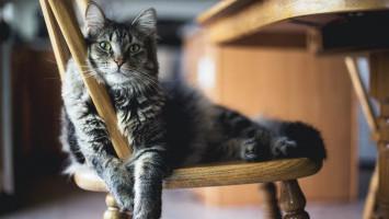 Kalau Pernah Kena COVID-19, Bisa Menularkan ke Kucing