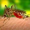 Mudah, Begini Cara Mencegah Penyakit Malaria