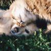 Hewan dapat Membuat Tenang Pemeliharanya