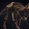 Kerangka T-Rex Dilelang Seharga Rp89 Hingga Rp118 Miliar, Berminat?