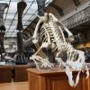 Tidak Hanya Manusia, Dinosaurus juga Bisa Kena Kanker