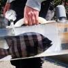Katsugyo Bag, Tas Unik Untuk Bawa Ikan Jalan-Jalan