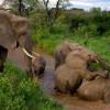 Baby Boom Gajah di Kenya Akibat Penutupan Ekowisata Selama Pandemi