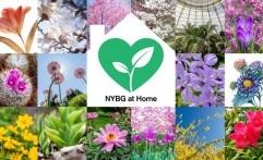 Ingin Belajar Berkebun? Yuk Ikut Kelas Virtual New York Botanical Garden!