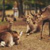 Tas Ramah Lingkungan untuk Selamatkan Rusa Nara