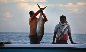 Indonesia Jadi Pemasok Terbesar Tuna di Dunia, Orang Kita hanya Kebagian Tongkol