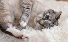 Kenali 5 Maksud Kebiasaan dari Kucingmu
