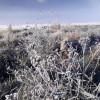 Tak Cuma Dieng, Gunung Bromo juga Punya Salju Penggaet Wisatawan