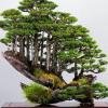 Uniknya 'Hutan Bonsai' Ala Masahiko Kimura