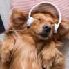 Pet Playlist, Daftar Lagu di Spotify Khusus untuk Hewan Peliharaan