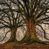 Kisah Viral Perempuan yang Menikah dengan Pohon, Alasannya Bikin Elus Dada