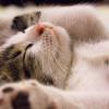 Menggemaskan! Begini Cara Kucing Menunjukkan Kasih Sayang