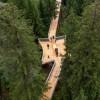 Senda dil Dragun Swiss, Treetop Trail Terpanjang di Dunia