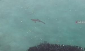 Pemburu Ikan Hiu di Raja Ampat Marak