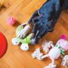 Jauhkan Benda-benda ini dari Kunyahan Anjing