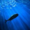 Lihat Nih Kehidupan di Bawah Laut Dalam yang Bikin Penasaran