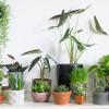 Tidak Hanya Estetis, Tanaman Hias Indoor Baik untuk Kesehatan