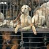 Ini Kata Wagub Soal Ditemukan Pedagang Daging Anjing di Pasar Senen