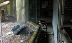 Kebun Binatang di Ceko Buat Meeting Virtual untuk Primata