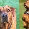 Anjing Pencari Diturunkan Cari Korban Hilang Bencana Alam di NTT
