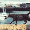 Parasit Toxoplasma Gondii, Bikin Tikus Tak Takut Kucing