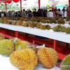 Durian Kunyit dari Sanggau Juara Festival Durian 2019