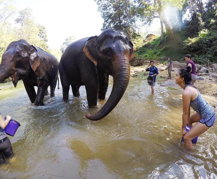 Chiang Mai's Elephant Nature Park mengajak pelancong berinteraksi dengan gajah. (Foto: instagram.com/kimberly.annn)