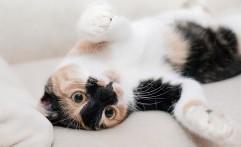 2 Kafe Kucing di Kemang ini Bisa Jadi Pengusir Stres