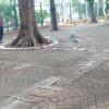 TNI Belum Mau Pastikan Anggotanya Jadi Korban Ledakan Monas