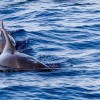 6 Destinasi Terbaik untuk Menyaksikan Lumba-lumba di Alam Liar