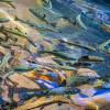 Tren Baru, Merawat Kulit dengan DNA Salmon
