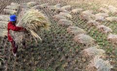 Harapan Para Petani untuk Pemerintah Terkait HET