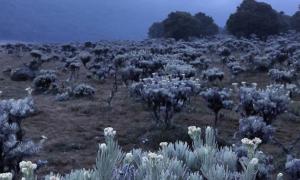 5 Tempat Terindah untuk Melihat Bunga Edelweis