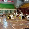 5.765 Warga Yogyakarta Ikut Rapid Test Massal