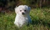 Mengenal Parvo, Virus Mematikan yang Mengintai Anjing Kesayanganmu