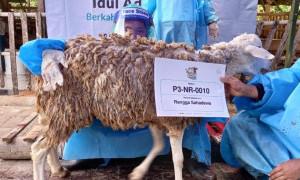 Laznas BSMU Salurkan Lebih dari 100 Ribu Kantong Daging Kurban pada Idul Adha 1442 H