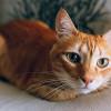 Brimob Viral yang Lempar Kucing ke Parit Segera Diperiksa Propam