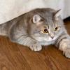 Tren Kucing Gemuk Harus Dihentikan