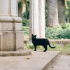 Alasan Orang Enggan Pelihara Kucing Berwarna Hitam