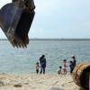 PSI Sebut Perluasan Ancol untuk Reklamasi Pulau K dan L