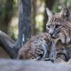 48 Spesies Diselamatkan dari Kepunahan Berkat Upaya Konservasi