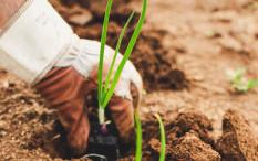Tantangan dalam Pemulihan Agro-Food di Masa Pandemi
