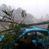 Hujan Es Landa Wilayah Yogyakarta, Satu Warga Terluka dan Pohon-Pohon Tumbang