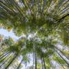 Wisata Hutan Bambu Di Indonesia Tidak Kalah Dari Jepang